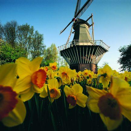 windmill-keukenhof-normal_jpg_229